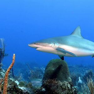 Shark spotted off the North Wall